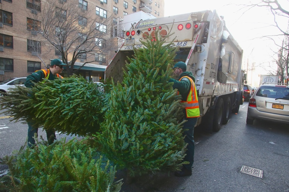 christmas-tree-recycling-collection